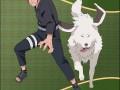 Инузука и собака